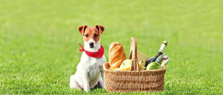 Чому собаки… або найпоширеніші собачі питання