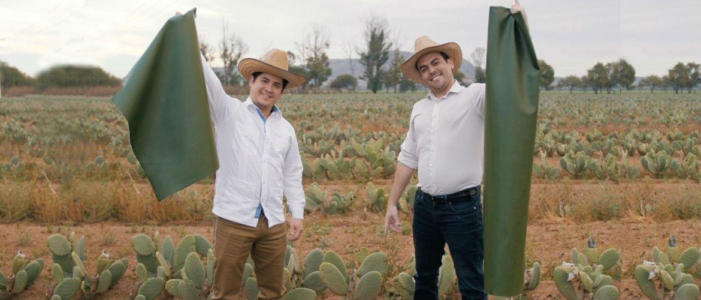 Штучна шкіра з кактусів-дивовижний винахід, родом з Мексики