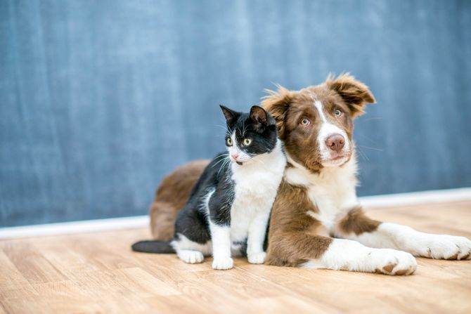 кіт з собакою