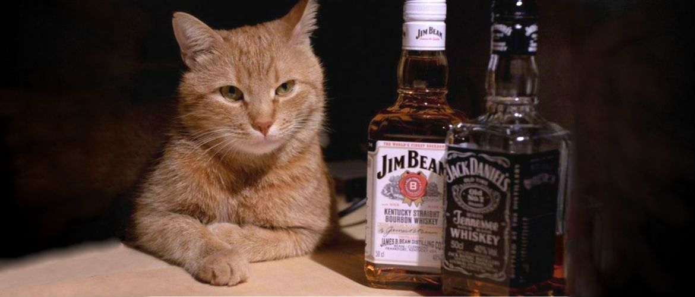 Чи можна котові … або 10 питань, які турбують котовласників