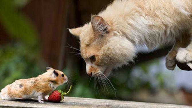 кіт і хомяк