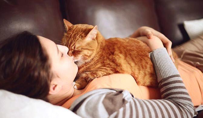 Чому кіт лягає нам на живіт