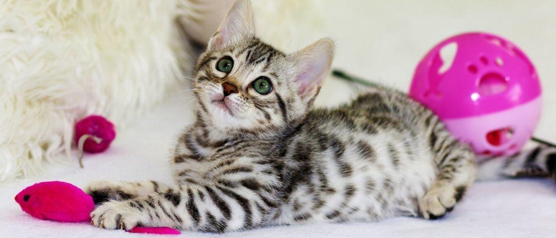 """7 Katzen """"warum"""" oder wie man Ihre Katze versteht"""