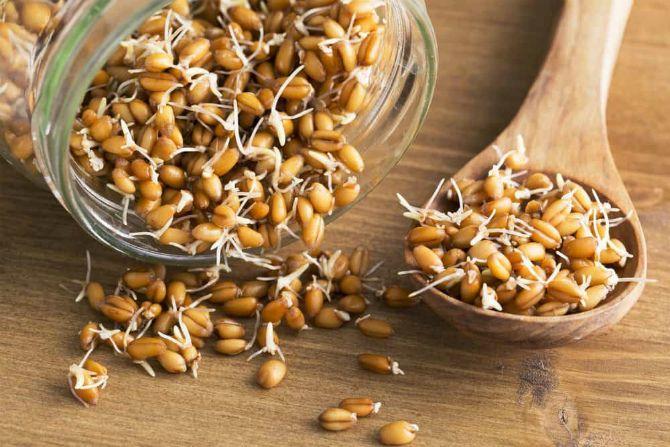 проросшая пшеница