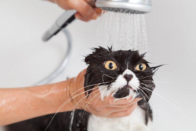 купання кота