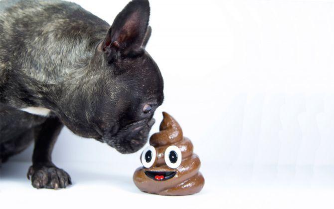 собаки їдять екскременти