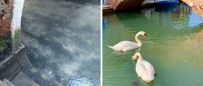 Коронавірус на користь  природі. Повітря і вода в карантинних регіонах стали чистішими!