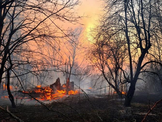 ліс горить