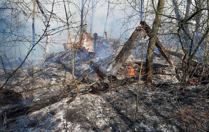 обгоревшее дерево