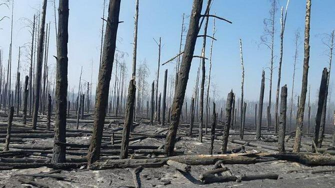 обгоревшие деревья