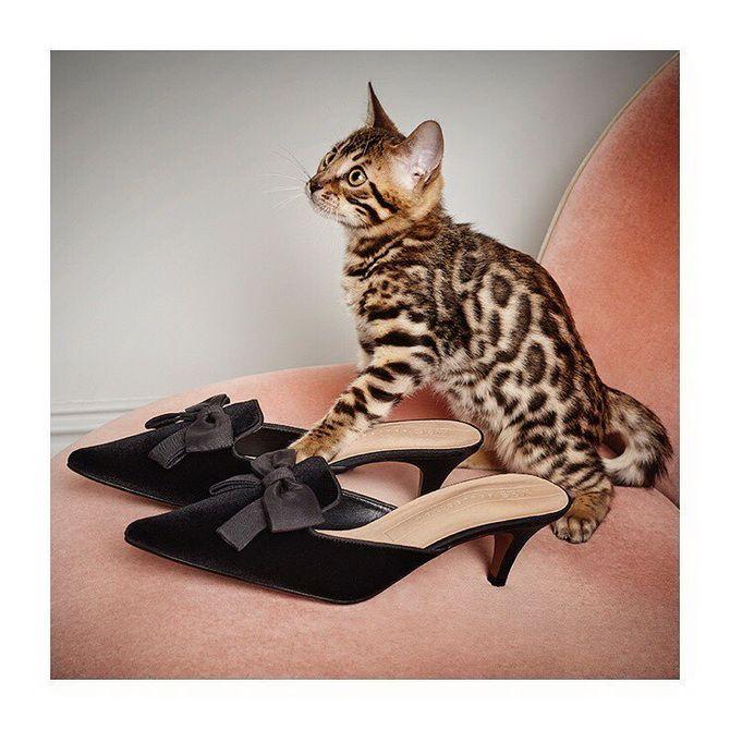 обувь женская мода 2020