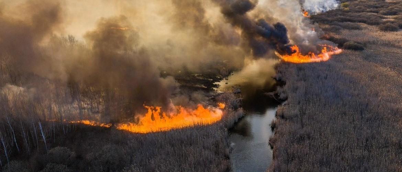 Пожежі, радіація і дикі тварини: що зараз відбувається в Чорнобилі?