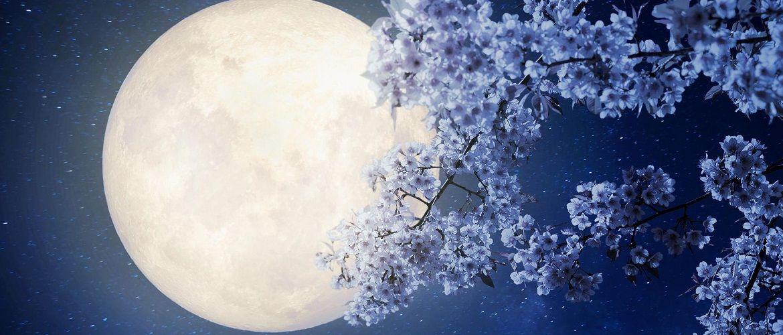 Цветочное Полнолуние в мае 2020 года: что можно и нельзя делать по лунному календарю