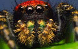 Самые поразительные пауки нашей планеты