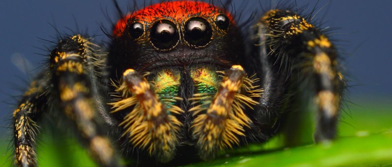 Найвражаючі павуки нашої планети