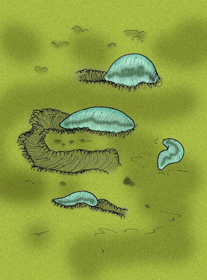 Ikaria wariootia