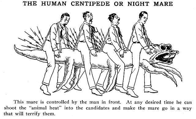 Людська багатоніжка