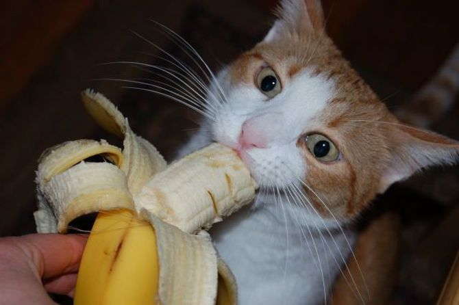 кот и банан
