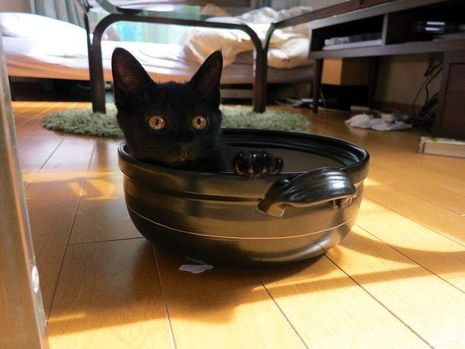 кот в миске