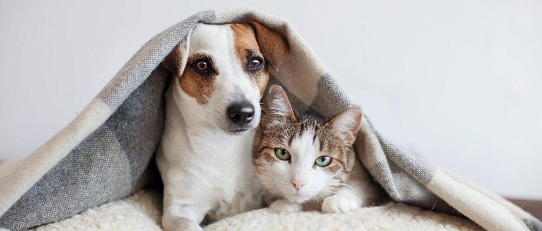 # Ich bin kein Virus: Bekommen Tiere Coronavirus?
