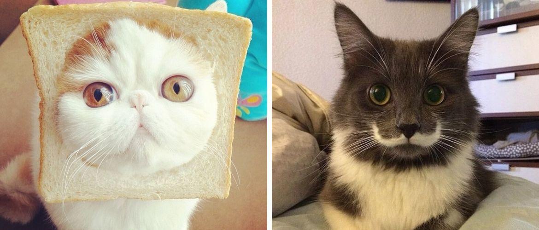 Почему мы так любим котиков из интернета?