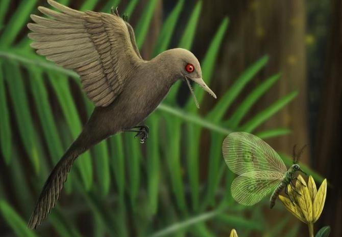 Динозавр Oculudentavis khaungraae