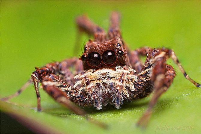 Павук Порша