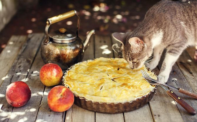 кот и пирог