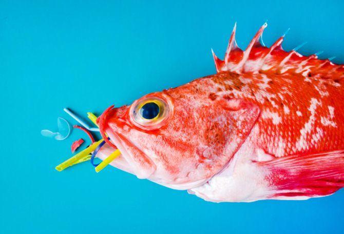 риба пластик