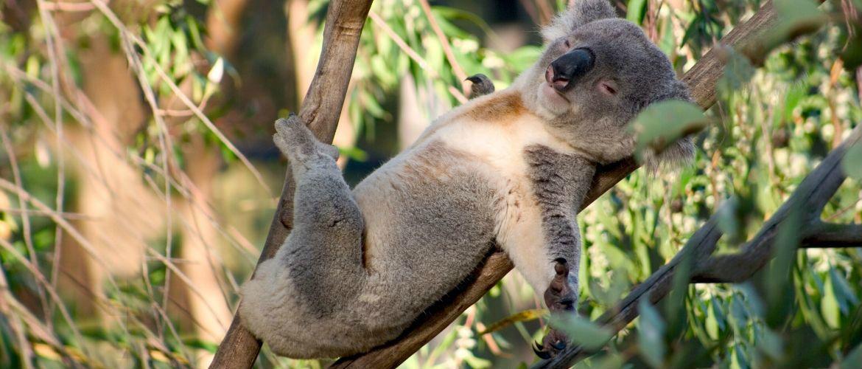 10 фактів про коал