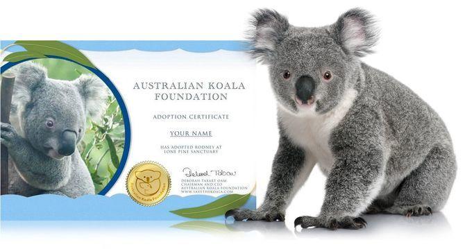 сертифікат коала