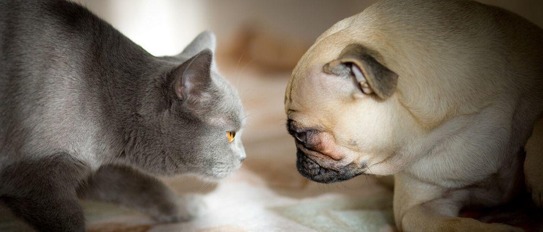 Как кошка с собакой: почему они враждуют?
