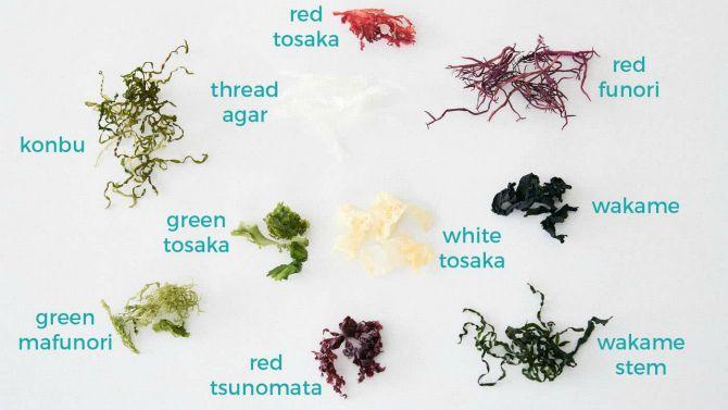 рекомендації щодо використання водоростей
