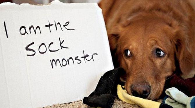 собака і Шкарпетки