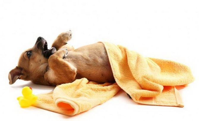 собака і Рушники