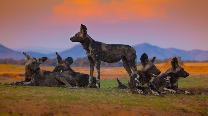Кращі документальні фільми про дику природу і тварин, які розкриють багато таємниць 9