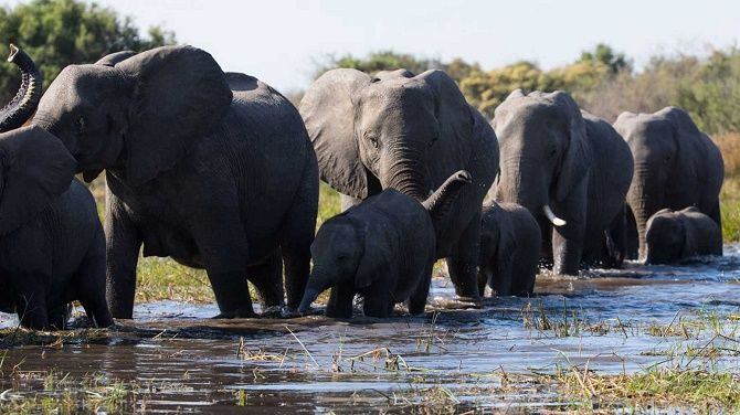 Кращі документальні фільми про дику природу і тварин, які розкриють багато таємниць 2