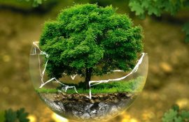 World Environment Day 2021 – beautiful pictures, poems and prose on Ecologist Day