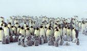 Кращі документальні фільми про дику природу і тварин, які розкриють багато таємниць