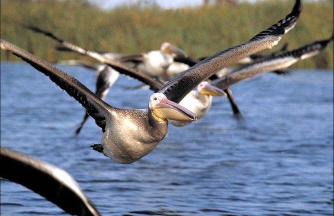 Кращі документальні фільми про дику природу і тварин, які розкриють багато таємниць 3