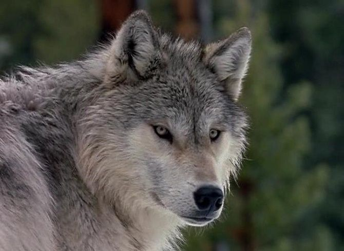 Лучшие документальные фильмы про дикую природу и животных, которые раскроют много тайн 1