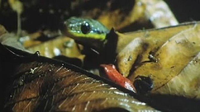 Лучшие документальные фильмы про дикую природу и животных, которые раскроют много тайн 6