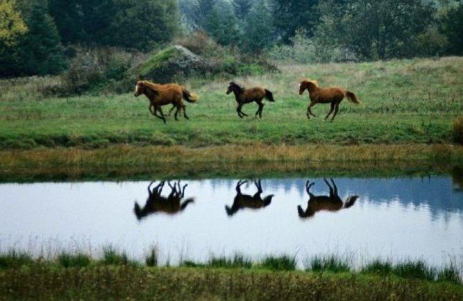 Кращі документальні фільми про дику природу і тварин, які розкриють багато таємниць 5