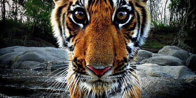 Лучшие документальные фильмы про дикую природу и животных, которые раскроют много тайн 7