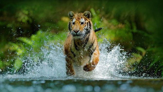 Кращі документальні фільми про дику природу і тварин, які розкриють багато таємниць 4