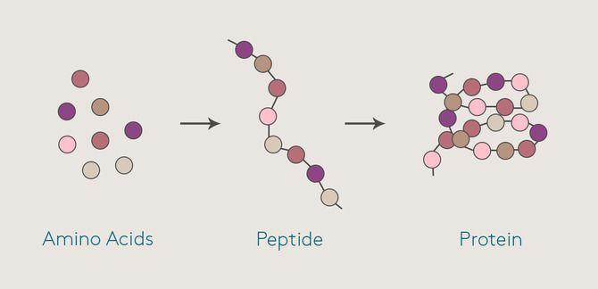Пептиди: таємні агенти нашої краси 1