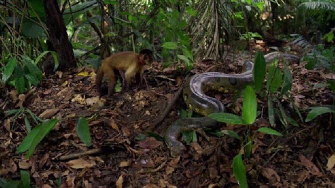 Неймовірні фільми про мавп, від перегляду яких неможливо відірватися 8
