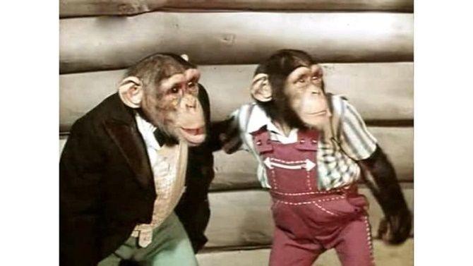 Неймовірні фільми про мавп, від перегляду яких неможливо відірватися 9