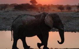 10 колоритних фільмів про Африку, які відкриють континент з іншого боку