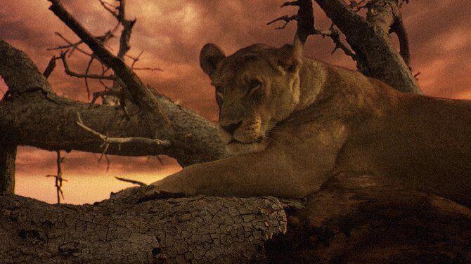 Найцікавіші фільми про левів, від яких неможливо відірватися 4